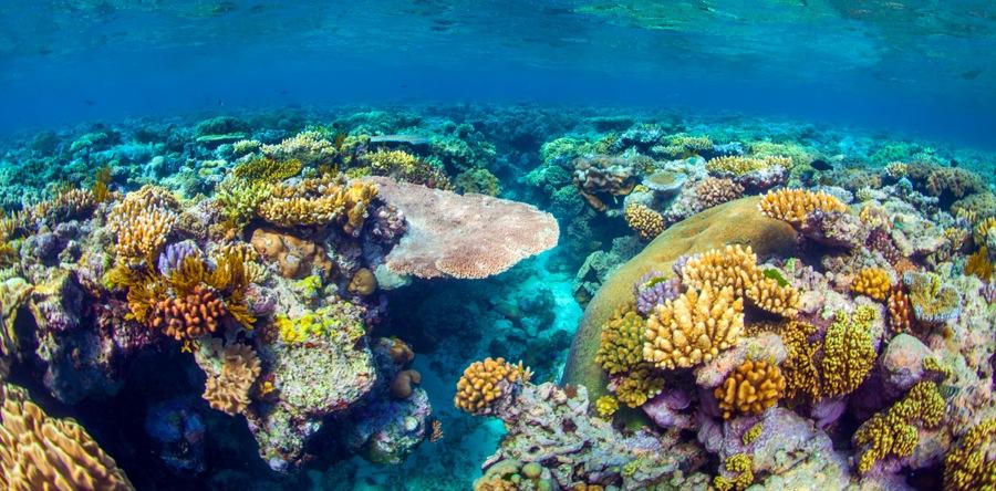 10 Fun Great Barrier Reef Facts - Meridian Port Douglas